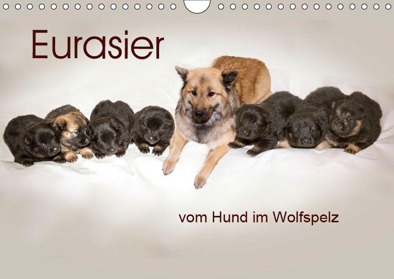 Kalender Eurasier, der Hund im Wolfspelz Hunde