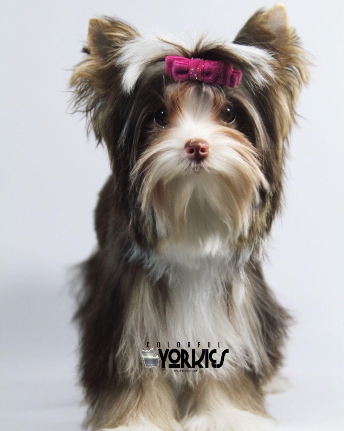 Pin On Beautiful Dogs
