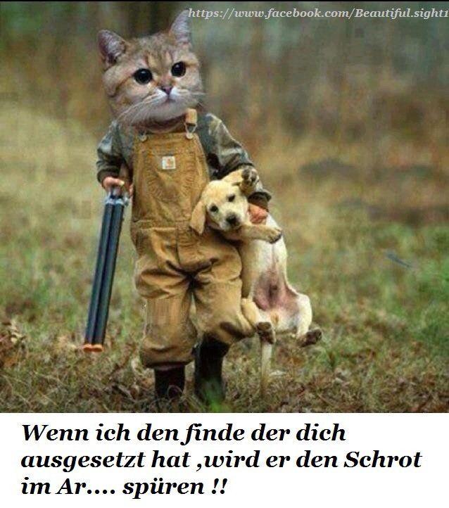 Dreamies De Katzen Lustige Spruche Katze Lustig