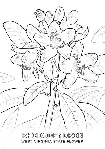 West Virginia State Flower Coloring Page From West Virginia