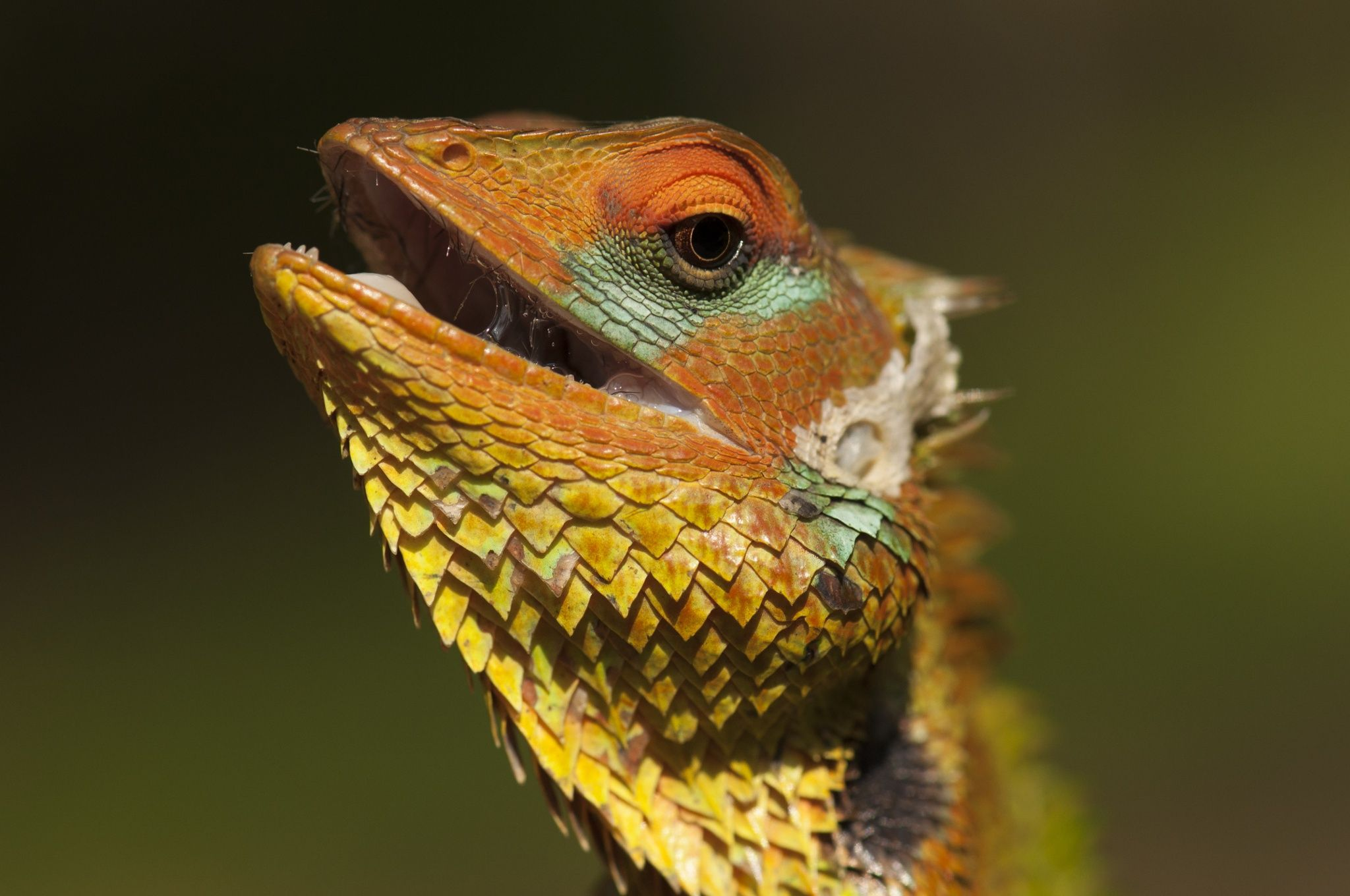 Green garden lizard by Camilla Korsnes on 500px | Reptiles ...