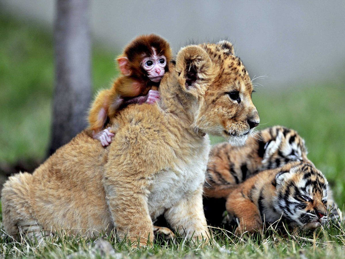 19 Unlikely Animals Who Are Best Friends Animals Friendship Animals Friends Cute Animals