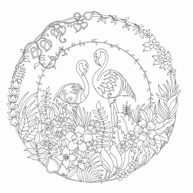 Johanna Basford Coloring Book Elegant 1025 Best Images About Kreatywnie  Mandala On… Basford Coloring Book, Johanna Basford Coloring Book, Johanna  Basford Coloring