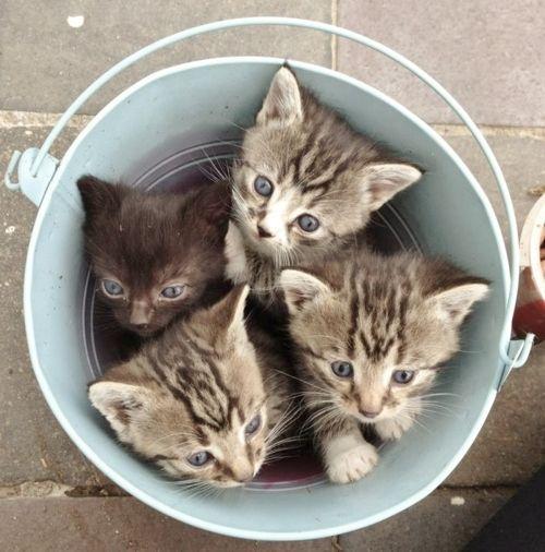Bucket of kittens