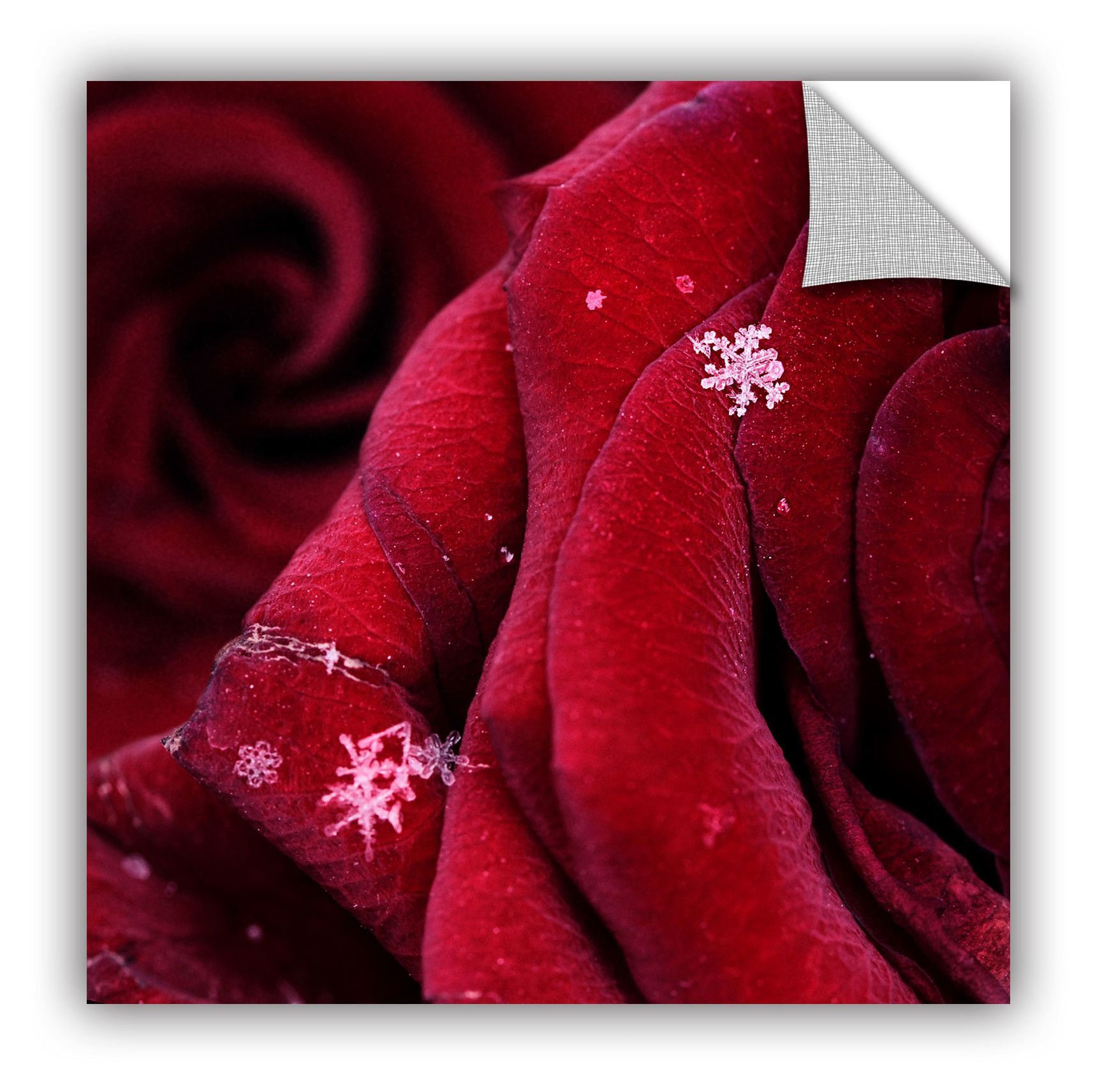 'First Snowflakes with Love' by Floriana Barbu Photographic Print