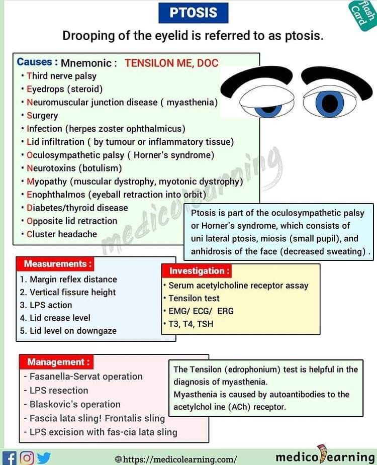 560 Ophthalmology Ideas In 2021 Eye Health Optometry Eye Facts