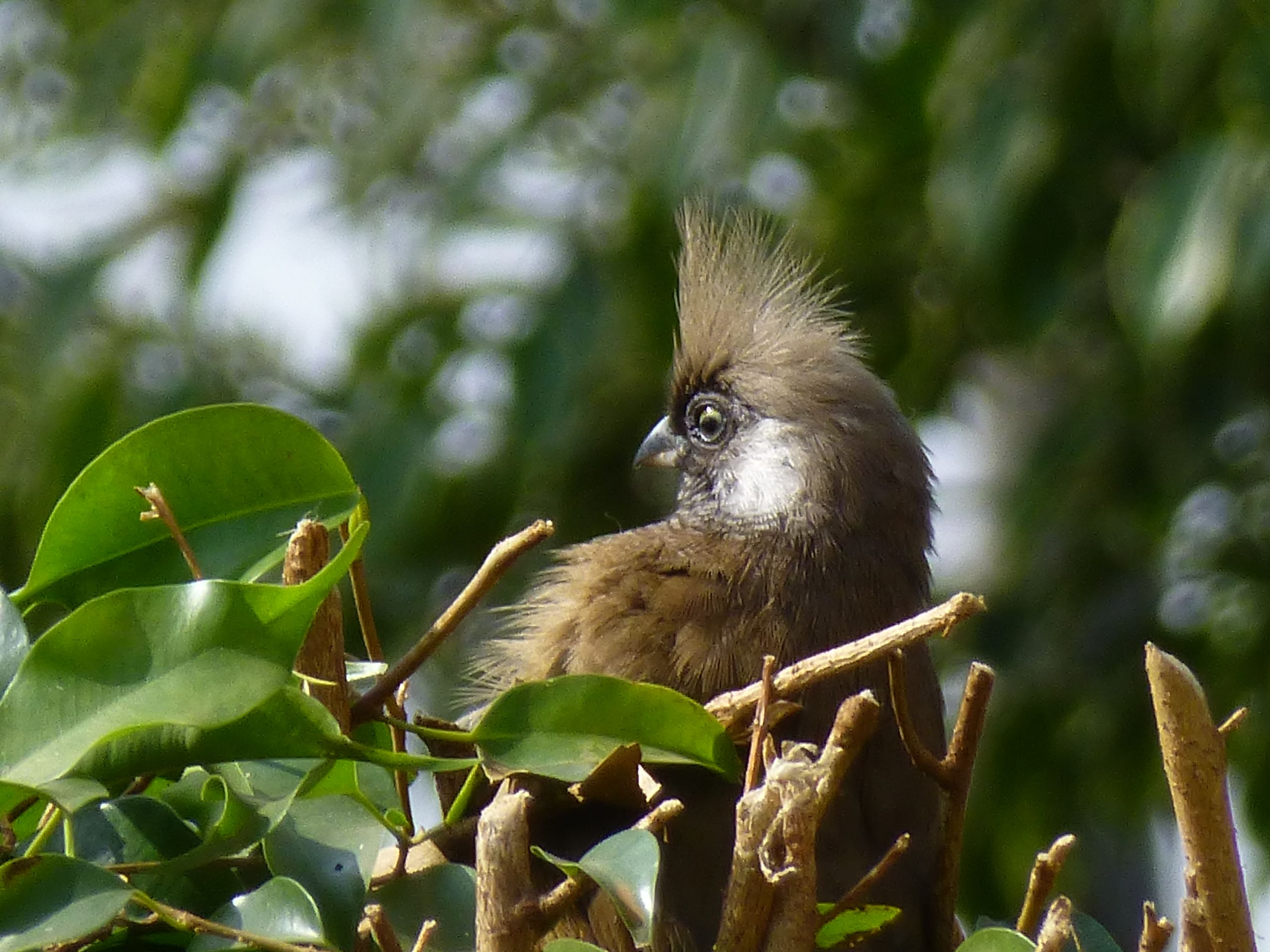 Goofy looking long-tailed birds nest in the yard.