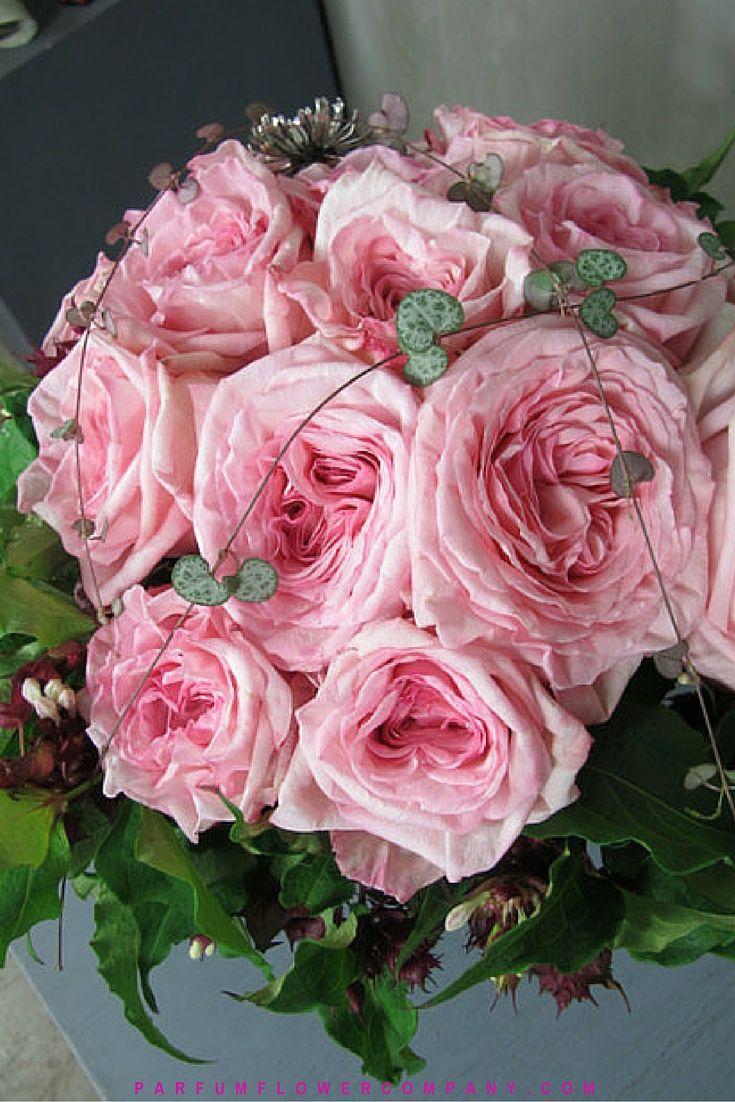 Scented Garden Roses Pink Ou0027Hara