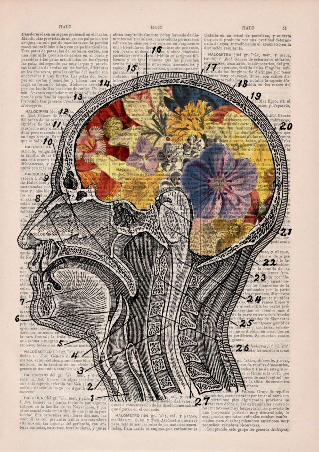 Pin de Morgan Jones en Aesthetic | Pinterest | Anatomía, Fondos y ...