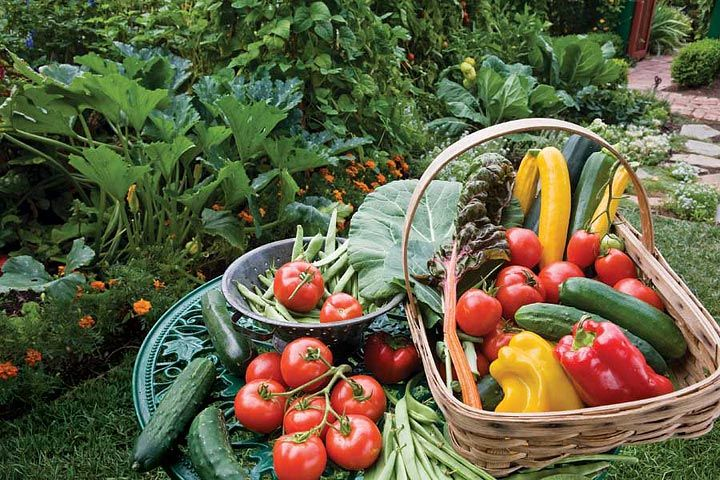 Organic gardening could be described as growing in harmony with nature, without using synthetic fertilizers, pesticides, herbicides or other such products