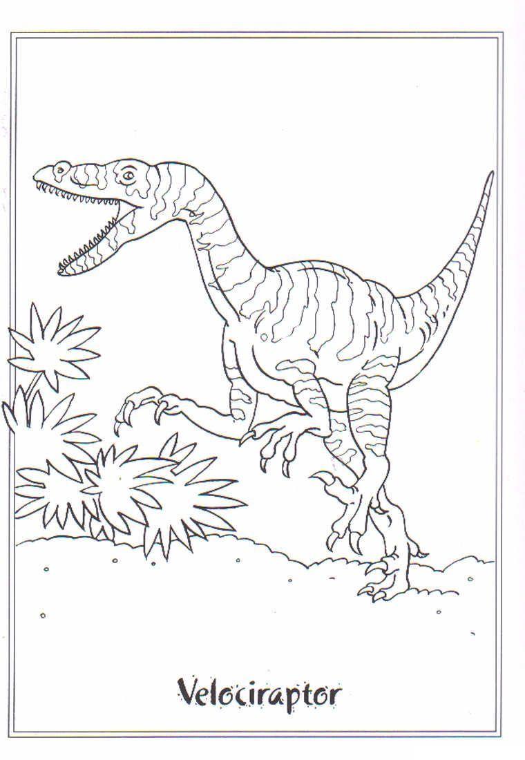 velociraptor ausmalbilder #ausmalbilder #velociraptor  Dinosaur
