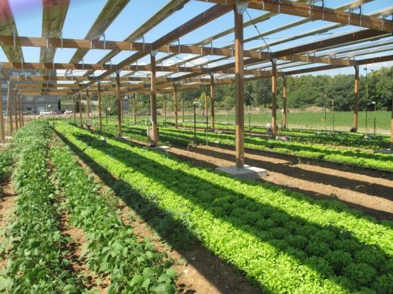 Agrivoltism Resilience Greenhouse Farming Vertical Farming Growing Food