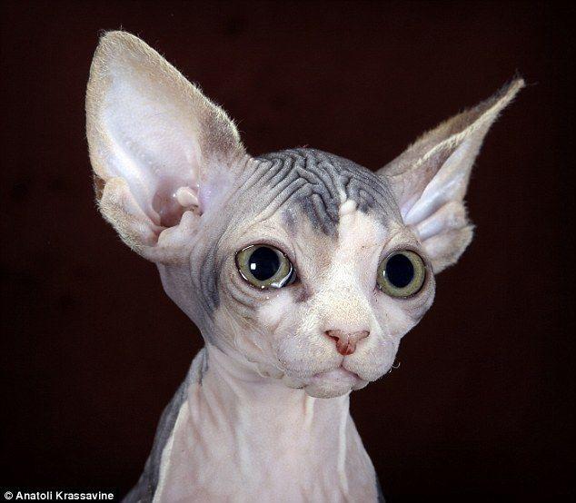 Mutilation Cat Like Eyes
