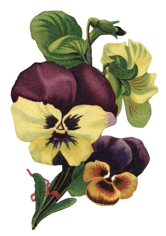 Vintage Garden Pansy Flower Picture – Click for printable image @ Vintage Fangirl