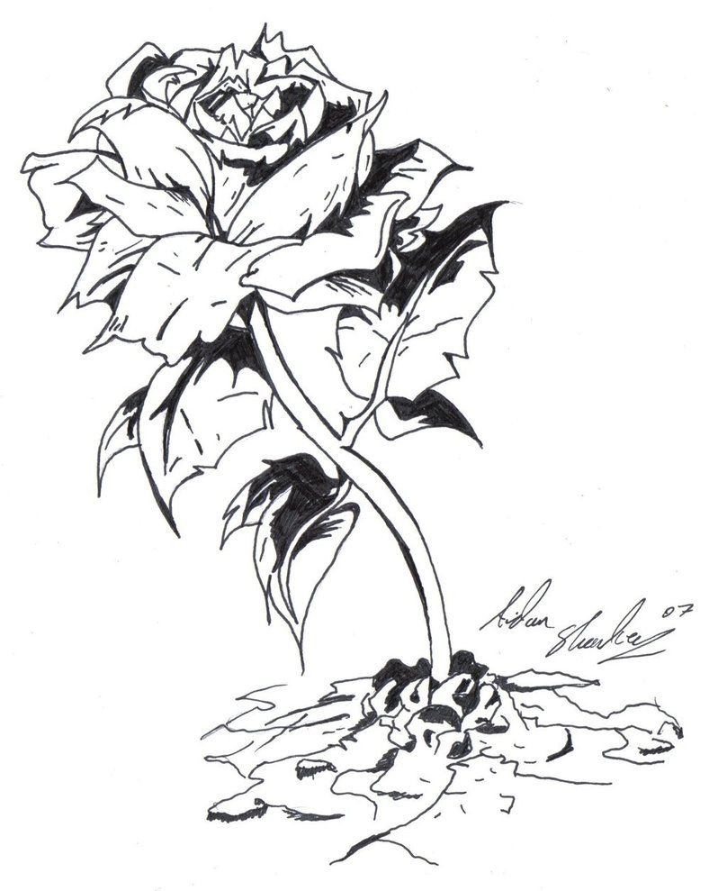 07a02c6f07b3c tupac the rose that grew from concrete book download deviantART More Like  Flower by johnfinch