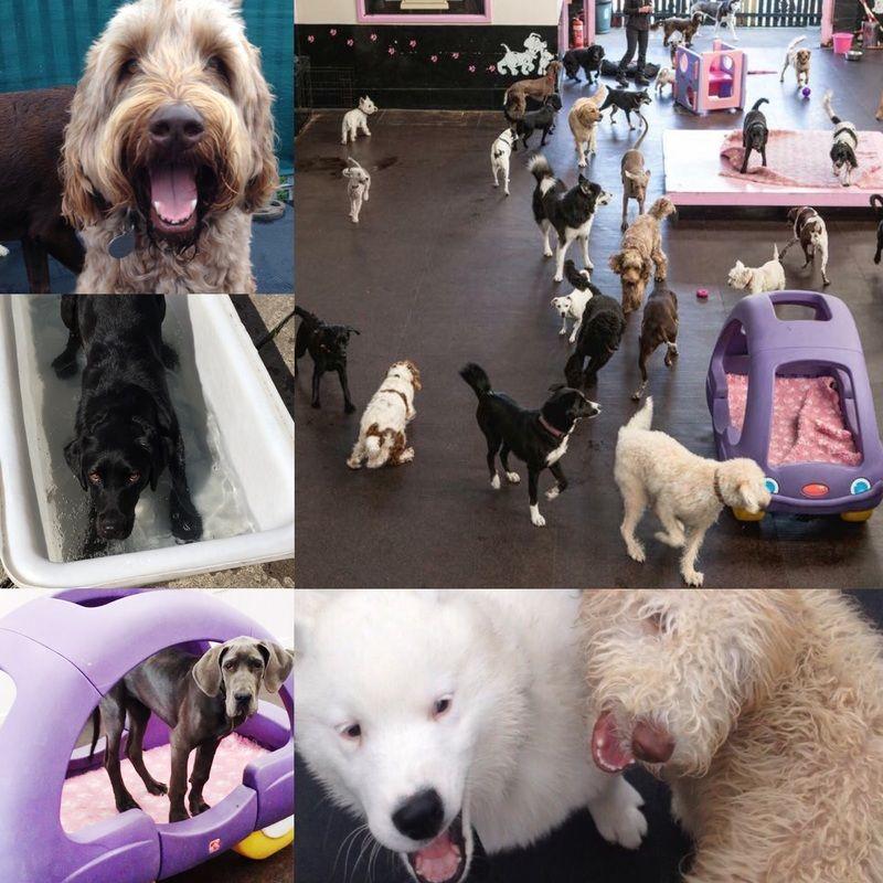 Dog Day Care UK Safe Paws Dogs, Dog days, Luxury dog