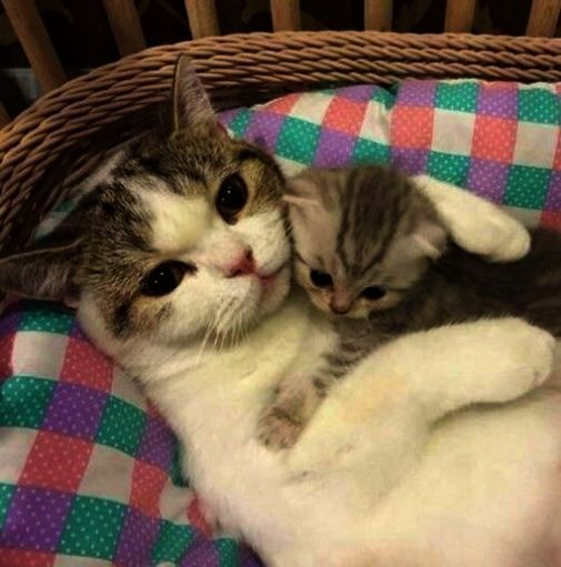 Cats And Kittens Townsville Cats And Kittens For Sale East