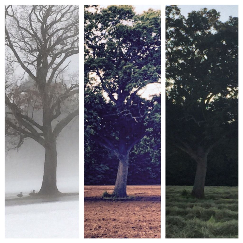 Seasons iPhone and pic stitch by Charlene