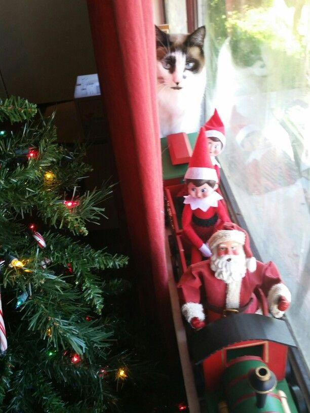 All aboard the Santa Express. Watch out for the abominable snow cat! lol