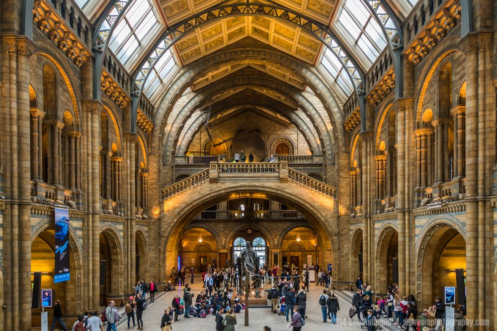 Foyer Museum Uk : Hintze hall natural history museum london uk londres
