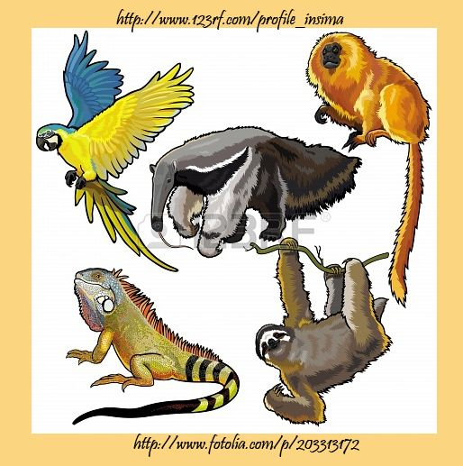 Pin By Insima On Wild Animals South America Animals Animal