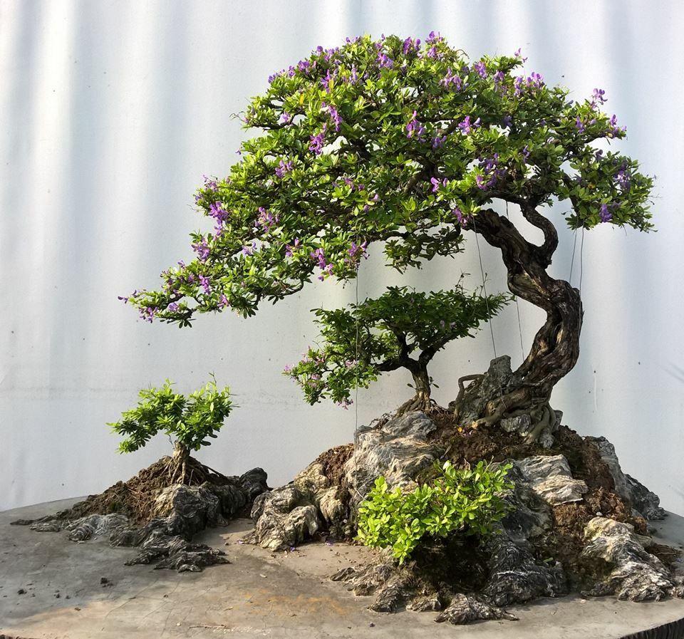 bonsai bonsai pinterest bonsai baum baum und bonsai wald. Black Bedroom Furniture Sets. Home Design Ideas