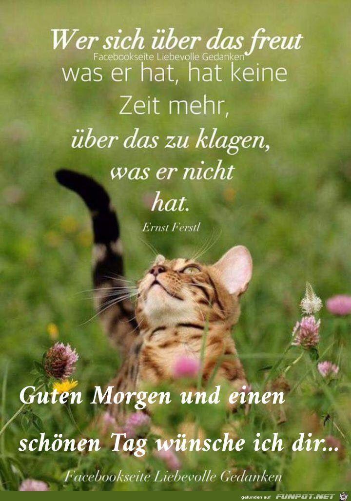 Pin Von Rena Wir Auf Wochentag Wünschen Guten Morgen