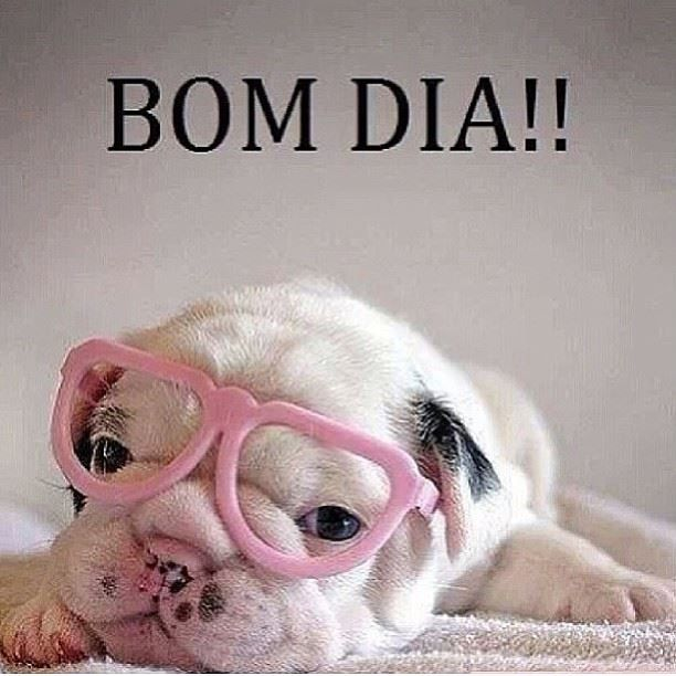 Famosos Frases de Bom dia para o Facebook e Whatsapp | focinho de cachorro  QR41