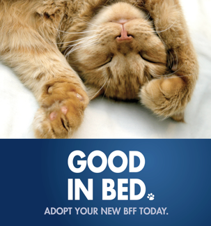 Pre-made and Customizable, Attention-Grabbing Cat Promotion Posters   ASPCA Professional -- Download and use today!