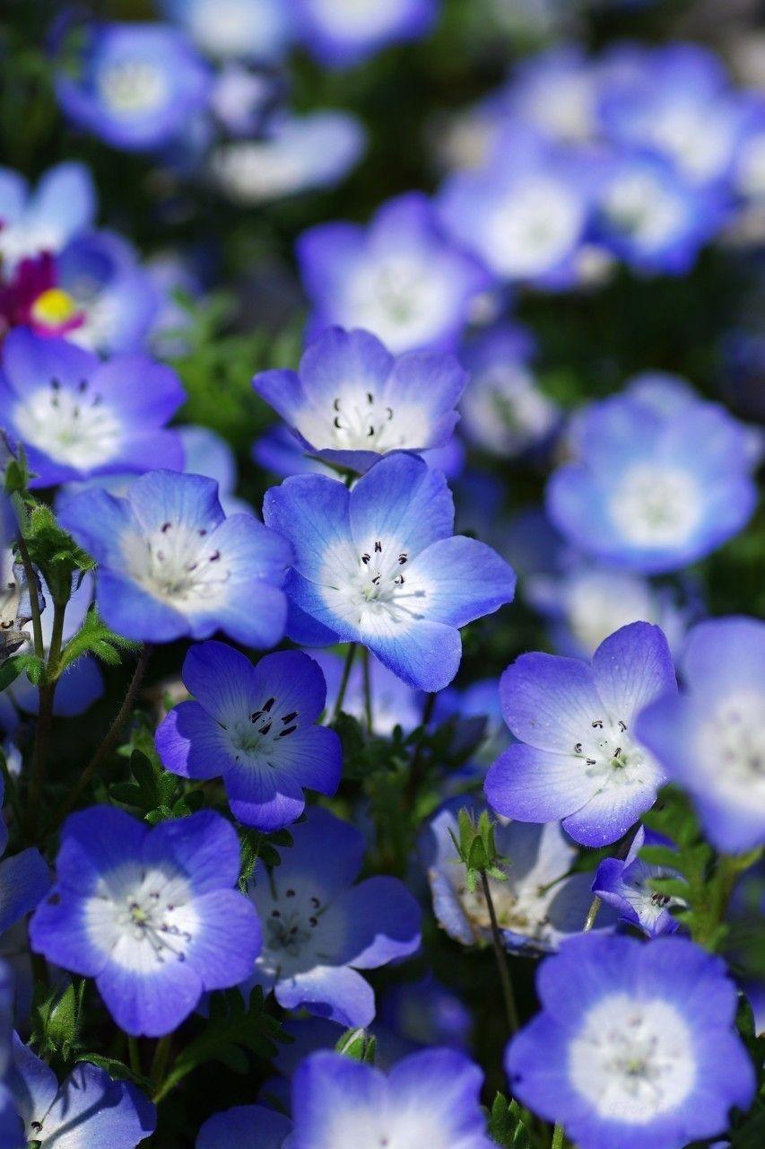 33+ Planta flores azules pequenas trends