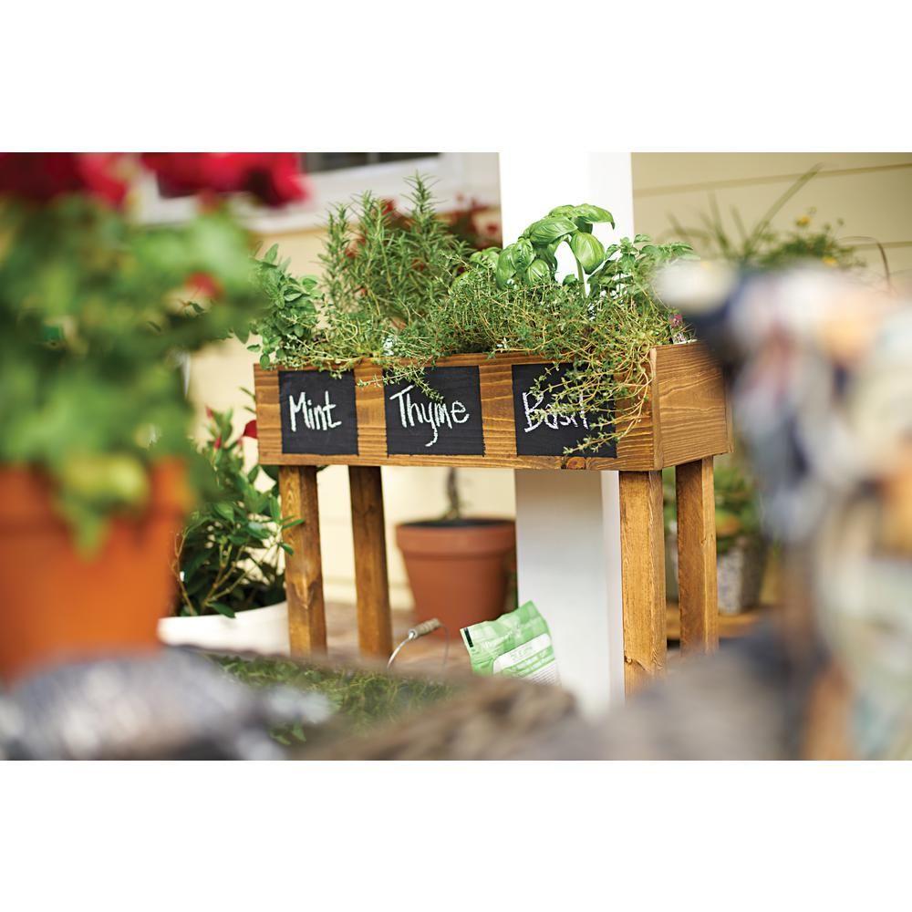 Bonnie Plants 2 32 Qt Basil Sweet Basil Genovese 5010 400 x 300