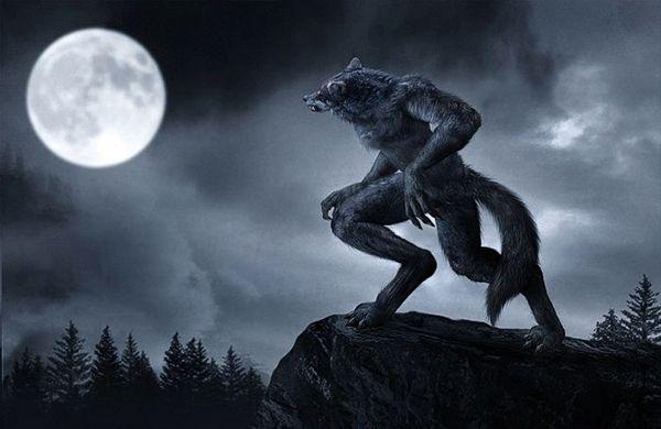 hombres lobos dibujos  Buscar con Google  Hombre lobo