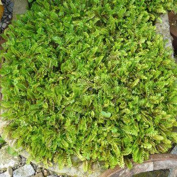 Hecken Baume Pflanzen Als Larmschutz Pflanze Geholze
