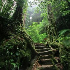 moss forest ireland - Google Search