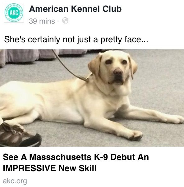 Pin By Jen Kooper On K 9 Heroes With Images American Kennel Club Yellow Labrador Retriever Skills