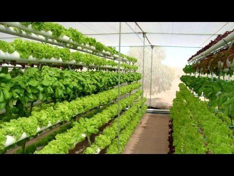 Gana 1000 invirtiendo 2 en cultivos hidroponicos for Jardines verticales introduccion