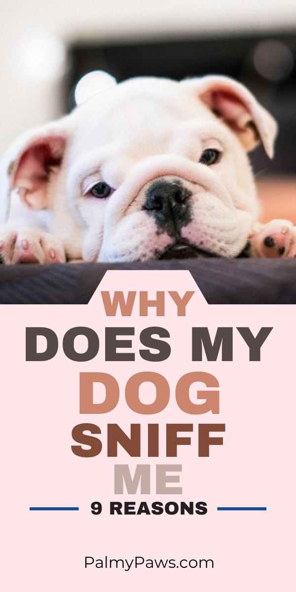 Why Do Dogs Sniff You Dog Names Boy Dog Names Girl Dog Names