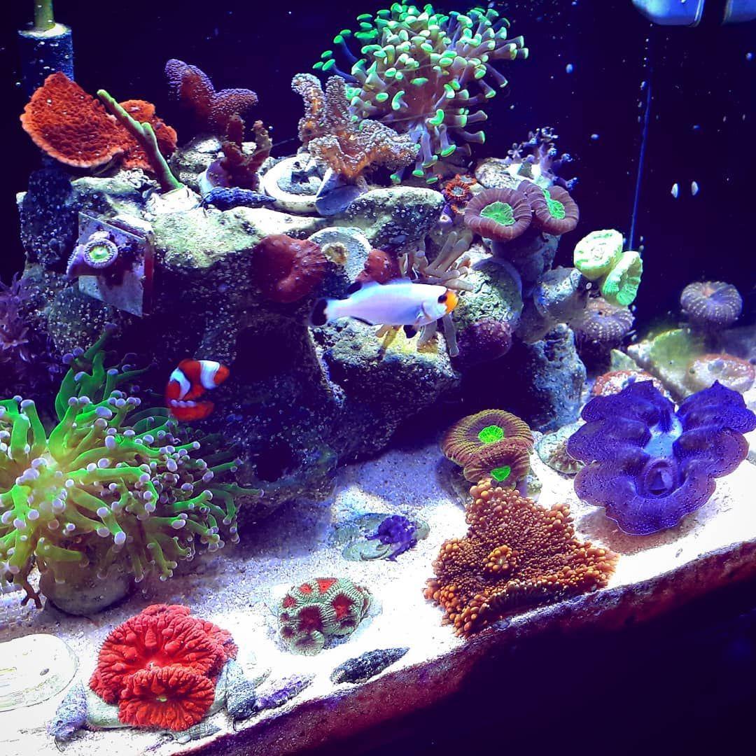 Nano Reef Coral Reef Aquarium Marine Aquarium Saltwater Tank