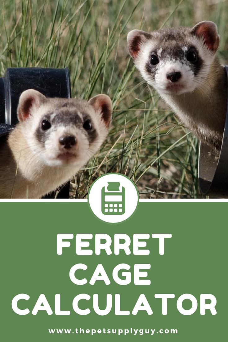 Ferret Cage Size Calculator Ferret Ferret Cage Small Pets