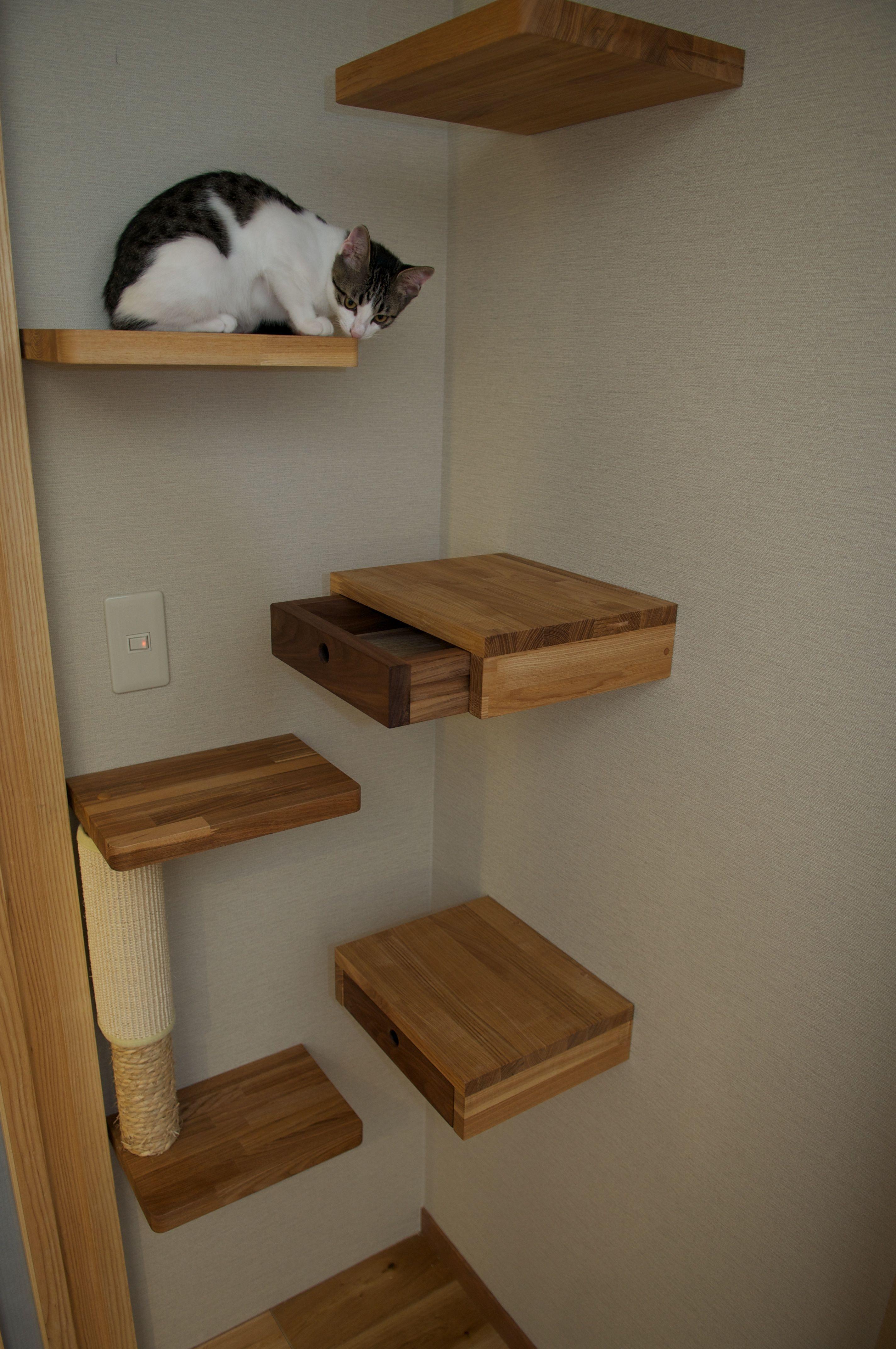 Cat Shelf And Secret Drawer For Catnip My Way Gatos