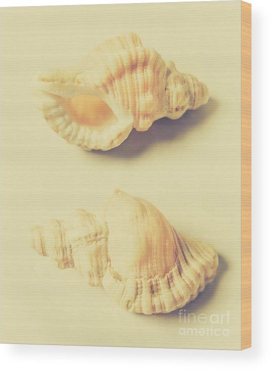 Marine Wood Print featuring the photograph Pastel Seashell Fine Art ...