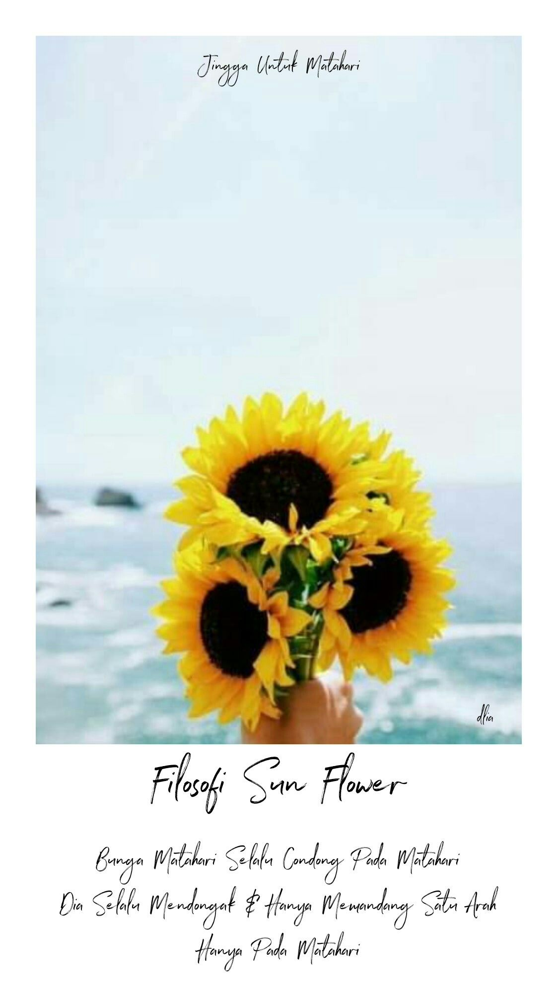 Filosofi Sun Flower Q In A Book Trilogi Jingga Untuk
