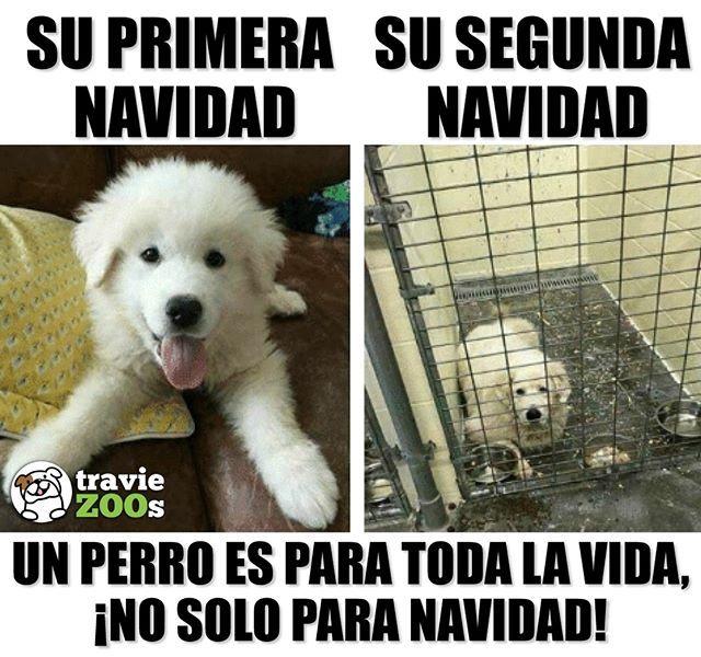No Solo Deben Ser Amandos Cuando Son La Novedad Sino Para Toda La Vida Dogs Christmas Navidad Tree Perros Dogs Animals Christmas Memes Funny
