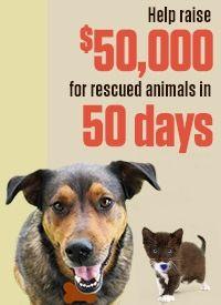 Help Petfinder Com Foundation At The Animal Rescue Site Animal Rescue Site Animal Rescue National Animal