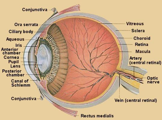 There is good news for patients with corneal disease who require ...