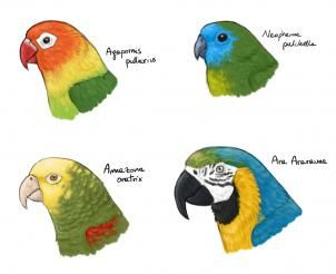 How To Draw Parrots Draw Macaws By Makangeni Parrot Drawing Parrots Art Drawings