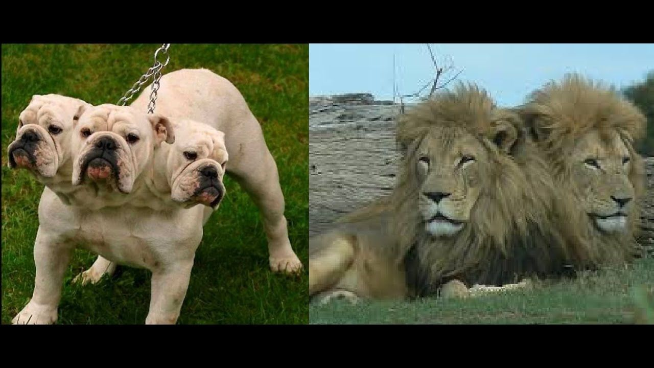 Top 10 Multi Headed Animal In The World Amazing