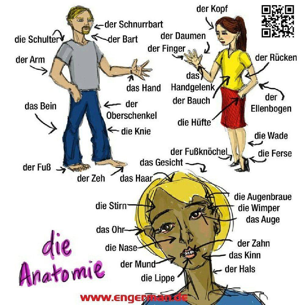 Die Anatomie | Deutsche Sprache | Pinterest