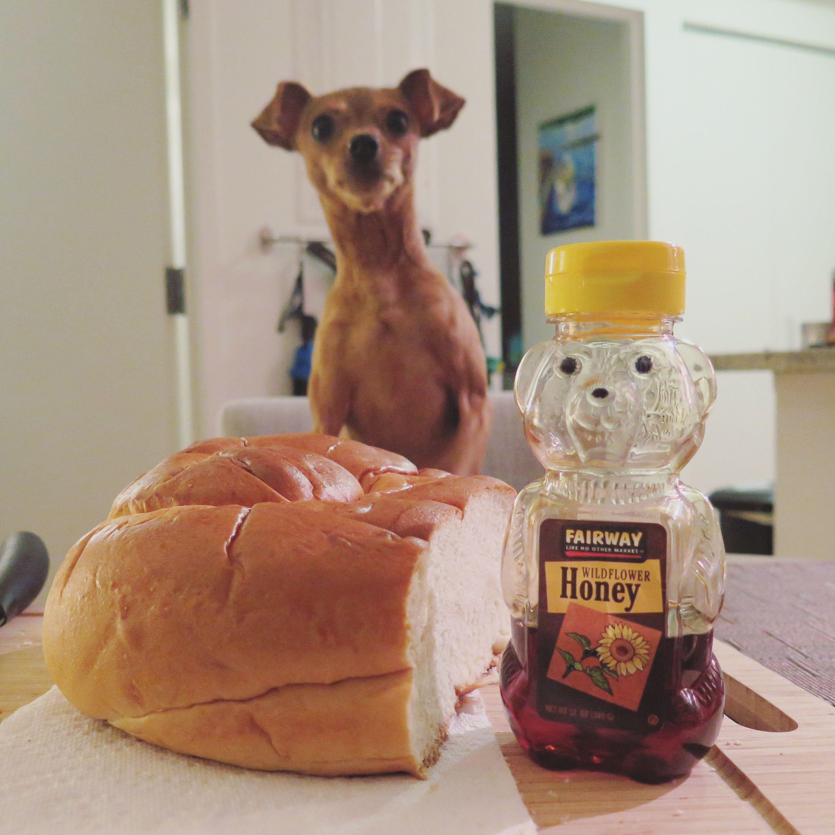 Dave is a Jewish Dog! Challah at me! roshHashana