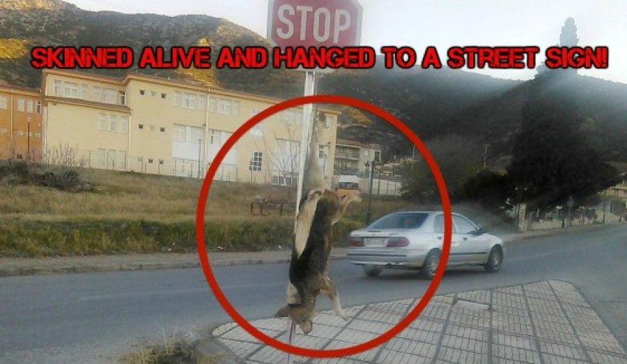 Heartless Subhuman Skinns Dog Alive And Hangs Him To A Street Sign In Greece! Demand Immedaite Action!   PetitionHub.org